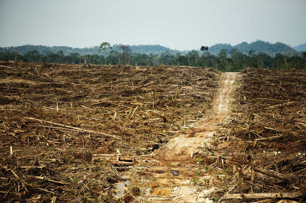 The destruction of primary rainforest by illegal palm oil plantations, Kalimantan, Borneo, Indonesia. Foto: David Gilbert/RAN (CC BY-NC 2.0)
